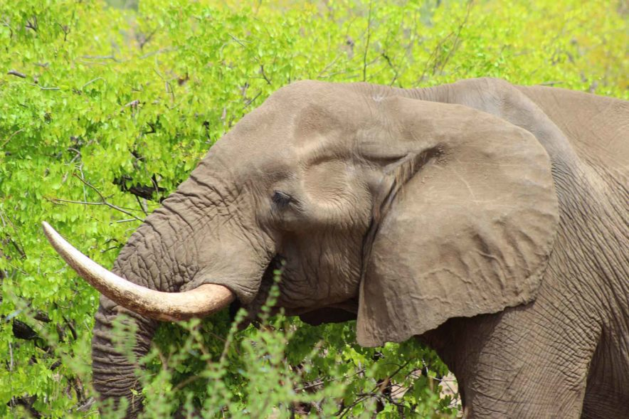Safari Groepsreis Lodges - 8 DAGEN Kaapstad Tuinroute Tsitsikamma NP Addo Elephant NP 52