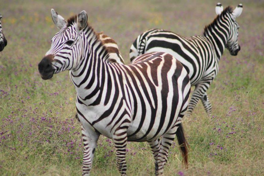 Safari Groepsreis Lodges 20 dagen Zuid-Afrika  Kruger park Swaziland, KwaZulu-Natal Tuinroute Lesotho en Kaapstad 100