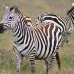 Safari Groepsreis Lodges 20 dagen Zuid-Afrika  Kruger park Swaziland, KwaZulu-Natal Tuinroute Lesotho en Kaapstad 51