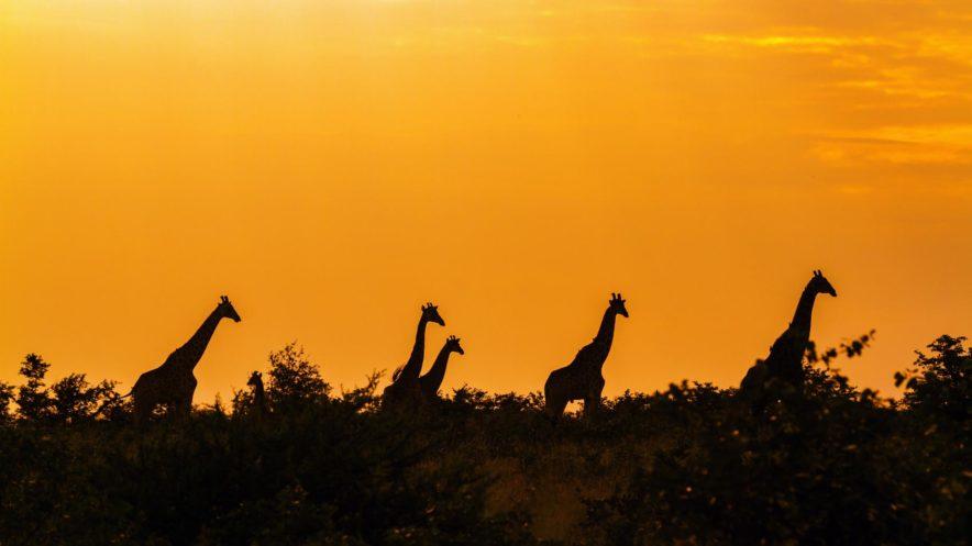 Safari Groepsreis Lodges 20 dagen Zuid-Afrika  Kruger park Swaziland, KwaZulu-Natal Tuinroute Lesotho en Kaapstad 94