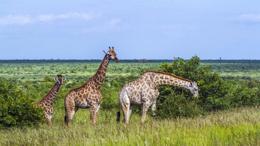 Safari Groepsreis Lodges 20 dagen Zuid-Afrika  Kruger park Swaziland, KwaZulu-Natal Tuinroute Lesotho en Kaapstad 95
