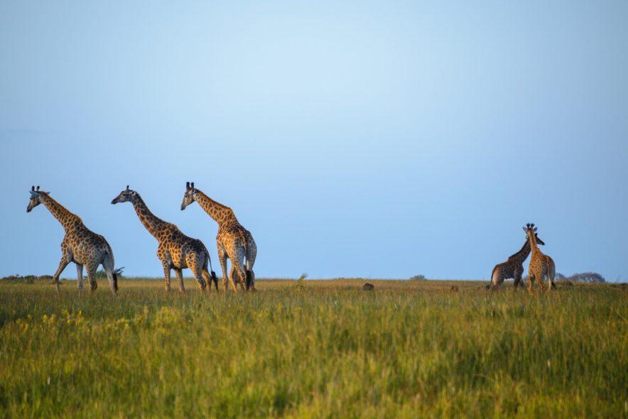 Safari Groepsreis Lodges 20 dagen Zuid-Afrika  Kruger park Swaziland, KwaZulu-Natal Tuinroute Lesotho en Kaapstad 97