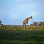 Safari Groepsreis Lodges 20 dagen Zuid-Afrika  Kruger park Swaziland, KwaZulu-Natal Tuinroute Lesotho en Kaapstad 23