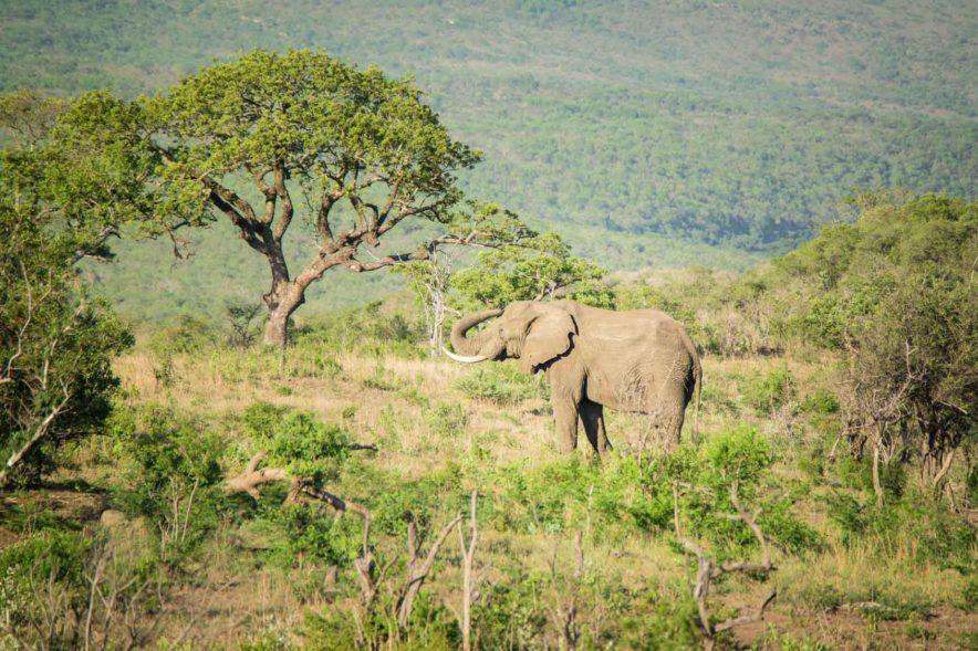 Safari Groepsreis Lodges 20 dagen Zuid-Afrika  Kruger park Swaziland, KwaZulu-Natal Tuinroute Lesotho en Kaapstad 91