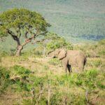 Safari Groepsreis Lodges 20 dagen Zuid-Afrika  Kruger park Swaziland, KwaZulu-Natal Tuinroute Lesotho en Kaapstad 28
