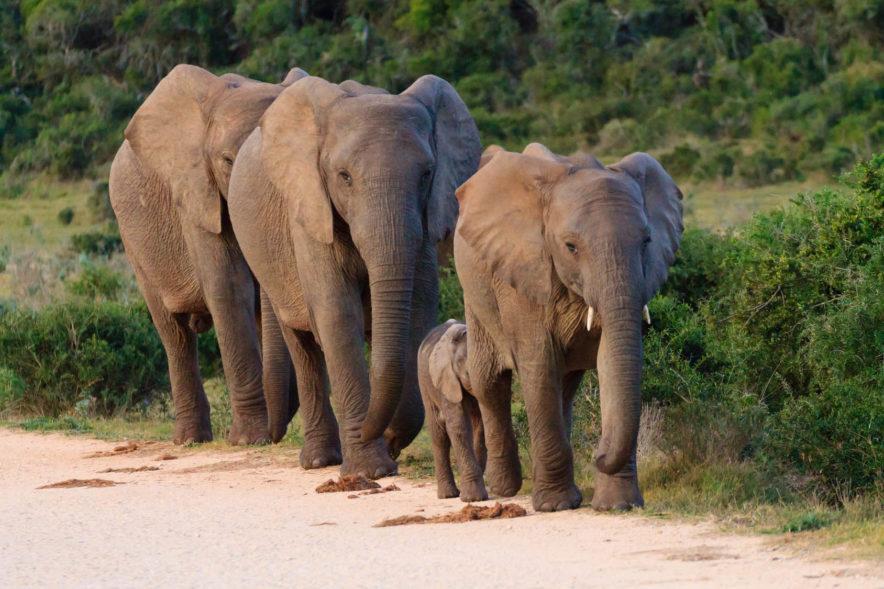 Safari Groepsreis Lodges 20 dagen Zuid-Afrika  Kruger park Swaziland, KwaZulu-Natal Tuinroute Lesotho en Kaapstad 93
