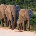 Safari Groepsreis Lodges - 8 DAGEN Kaapstad Tuinroute Tsitsikamma NP Addo Elephant NP 18