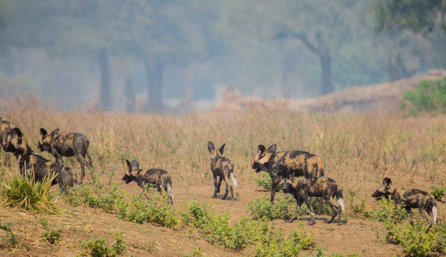 Safari Groepsreis Lodges 20 dagen Zuid-Afrika  Kruger park Swaziland, KwaZulu-Natal Tuinroute Lesotho en Kaapstad 82