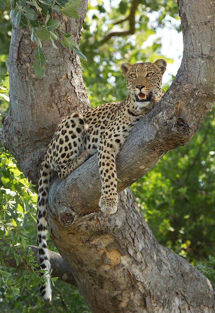 Safari Groepsreis Lodges 20 dagen Zuid-Afrika  Kruger park Swaziland, KwaZulu-Natal Tuinroute Lesotho en Kaapstad 112