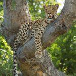 Safari Groepsreis Lodges - 30 DAGEN KAAPSTAD, ZUID-AFRIKA, NAMIBIË, BOTSWANA, VICTORIA FALLS, ZIMBABWE, JOHANNESBURG, KRUGERPARK & ESWATINI 98
