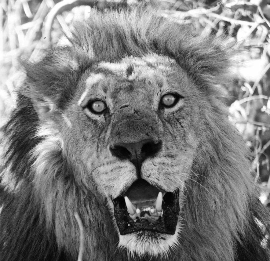 Safari Groepsreis Lodges - 13 DAGEN HET BESTE VAN ZUID-AFRIKA 68