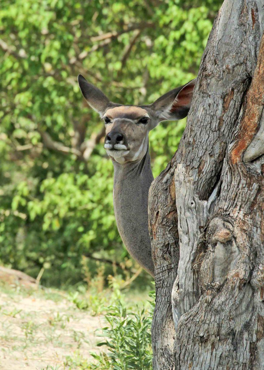 Safari Groepsreis Lodges - 13 DAGEN HET BESTE VAN ZUID-AFRIKA 69