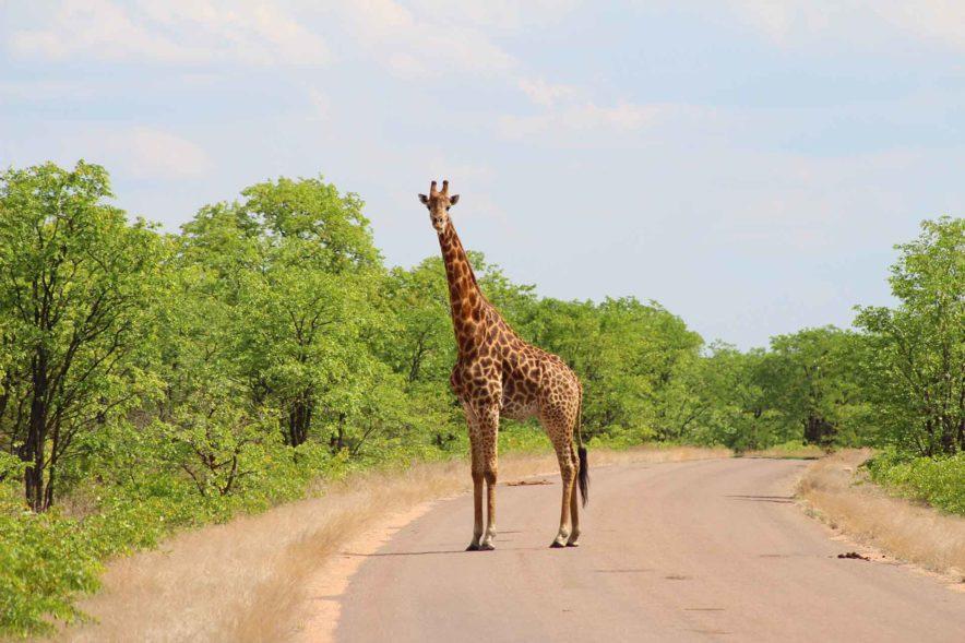 Safari Groepsreis Lodges 20 dagen Zuid-Afrika  Kruger park Swaziland, KwaZulu-Natal Tuinroute Lesotho en Kaapstad 113