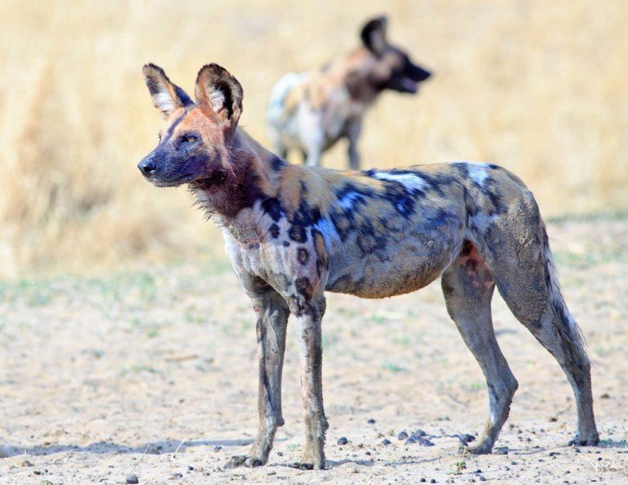 Safari Groepsreis Lodges - 13 DAGEN HET BESTE VAN ZUID-AFRIKA 52