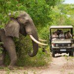 Safari Groepsreis Lodges - 30 DAGEN KAAPSTAD, ZUID-AFRIKA, NAMIBIË, BOTSWANA, VICTORIA FALLS, ZIMBABWE, JOHANNESBURG, KRUGERPARK & ESWATINI 97