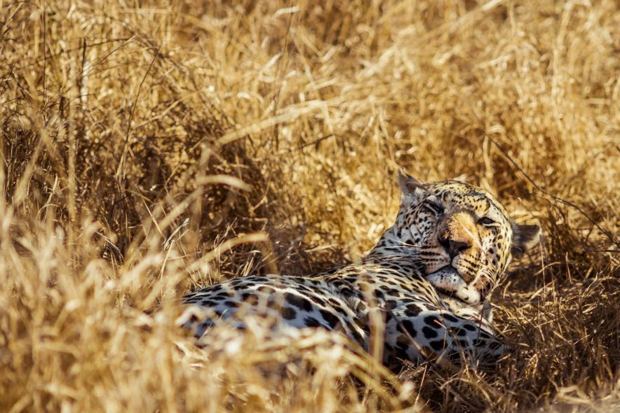 Safari Groepsreis Lodges - 13 DAGEN HET BESTE VAN ZUID-AFRIKA 80