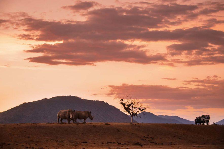 Safari Groepsreis Lodges - 13 DAGEN HET BESTE VAN ZUID-AFRIKA 82