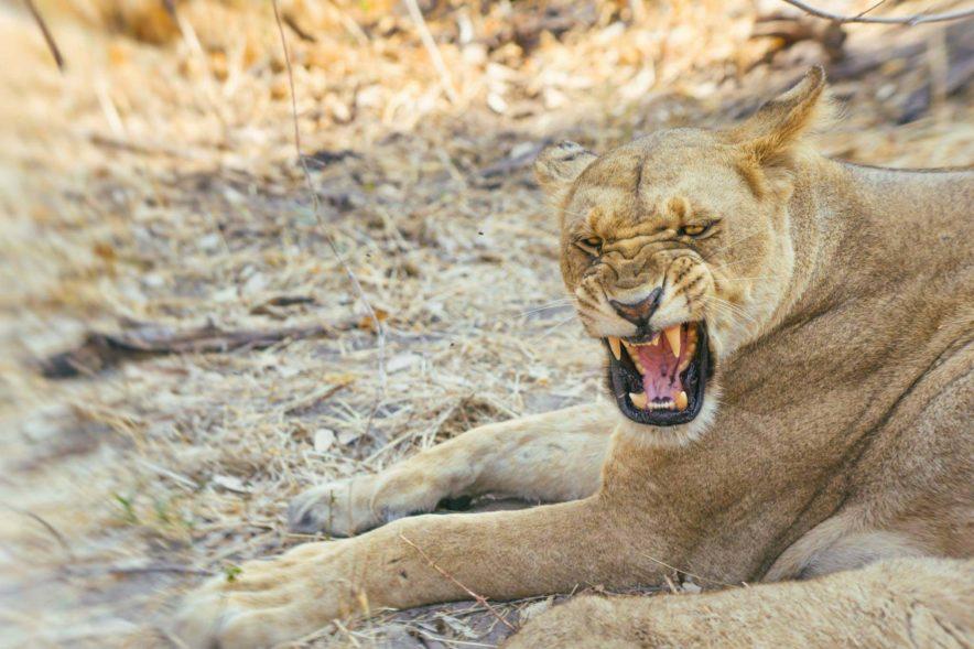 Safari Groepsreis Lodges - 13 DAGEN HET BESTE VAN ZUID-AFRIKA 61