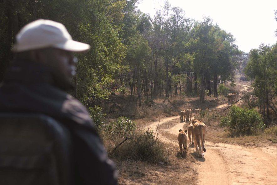 Safari Groepsreis Lodges - 13 DAGEN HET BESTE VAN ZUID-AFRIKA 91