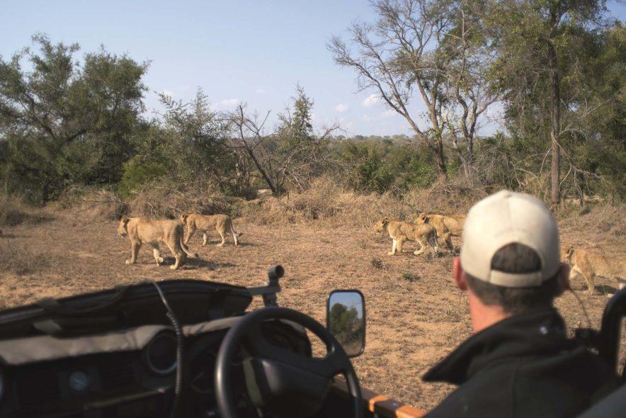 Safari Groepsreis Lodges - 13 DAGEN HET BESTE VAN ZUID-AFRIKA 92