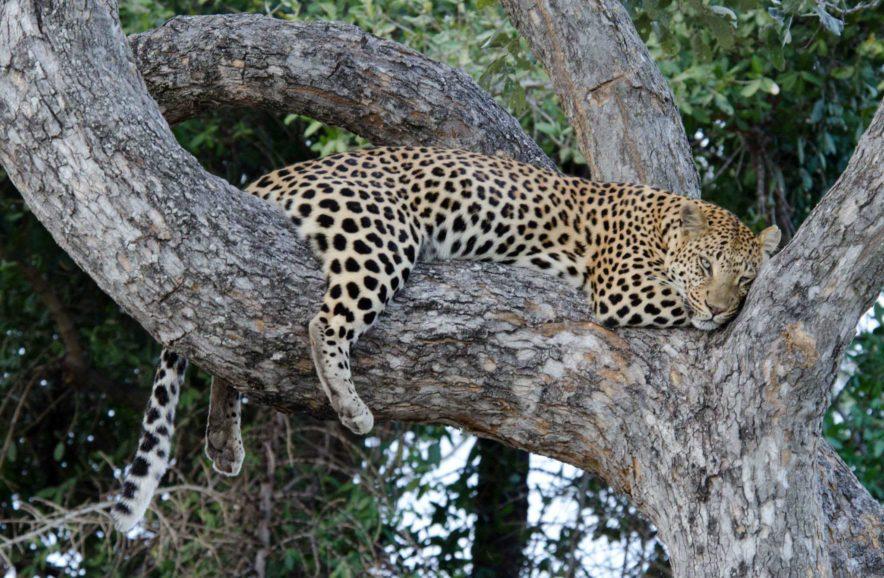 Safari Groepsreis Lodges - 13 DAGEN HET BESTE VAN ZUID-AFRIKA 62