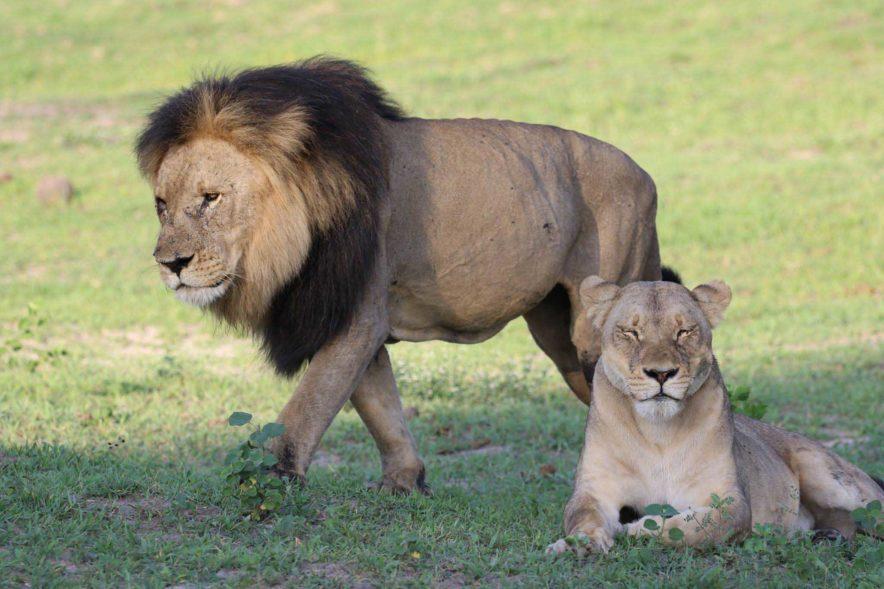 Safari Groepsreis Lodges - 13 DAGEN HET BESTE VAN ZUID-AFRIKA 63