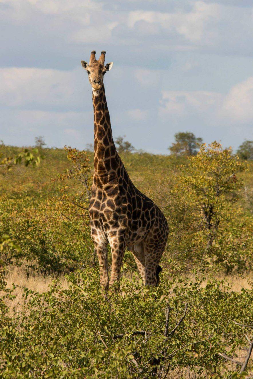 Safari Groepsreis Lodges - 13 DAGEN HET BESTE VAN ZUID-AFRIKA 64