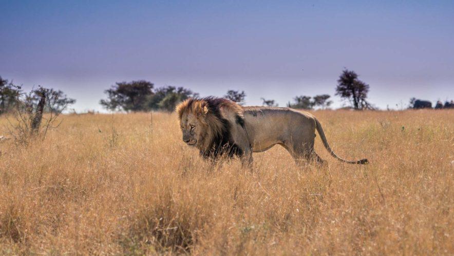 Safari Groepsreis Lodges 20 dagen Zuid-Afrika  Kruger park Swaziland, KwaZulu-Natal Tuinroute Lesotho en Kaapstad 129