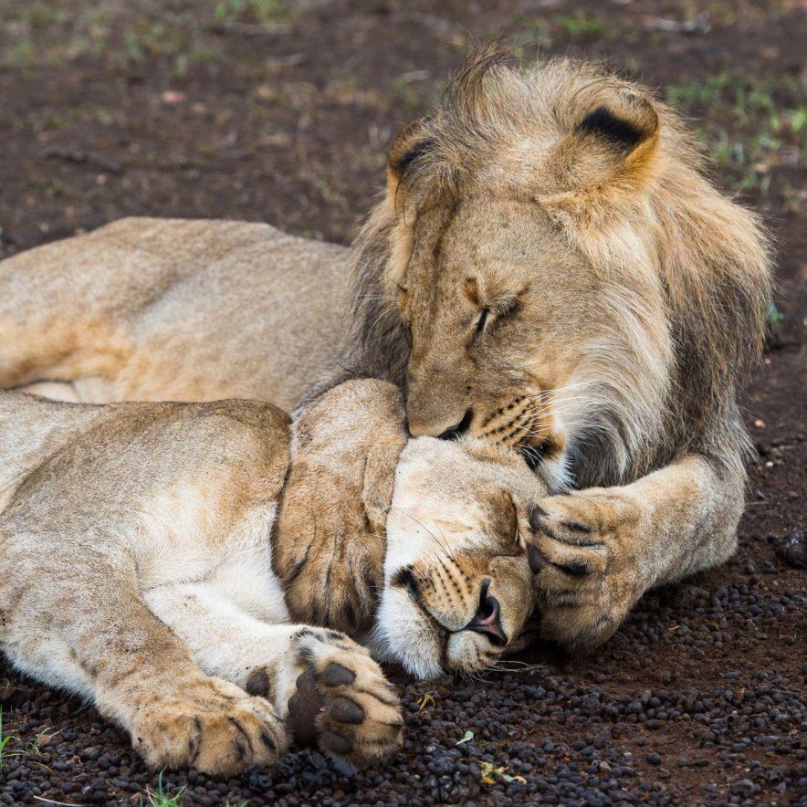 Safari Groepsreis Lodges - 13 DAGEN HET BESTE VAN ZUID-AFRIKA 97