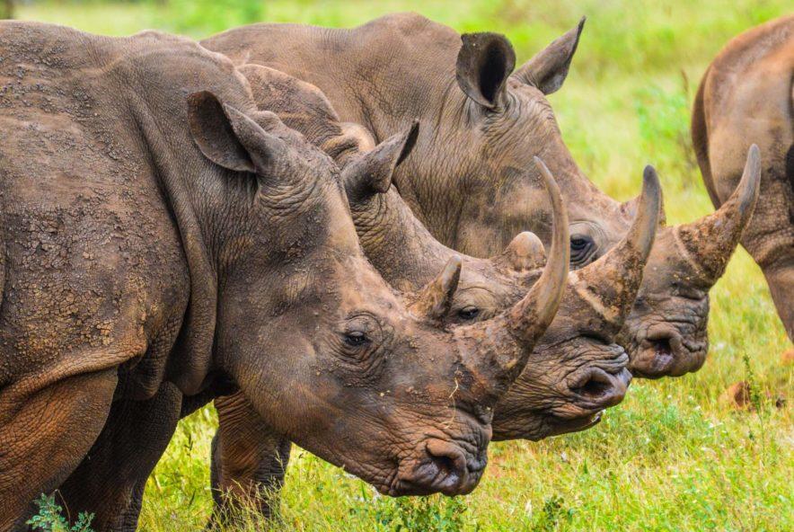 Safari Groepsreis Lodges - 13 DAGEN HET BESTE VAN ZUID-AFRIKA 110
