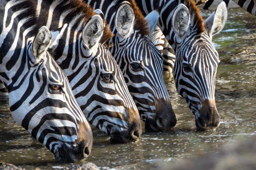 Safari Groepsreis Lodges 20 dagen Zuid-Afrika  Kruger park Swaziland, KwaZulu-Natal Tuinroute Lesotho en Kaapstad 157