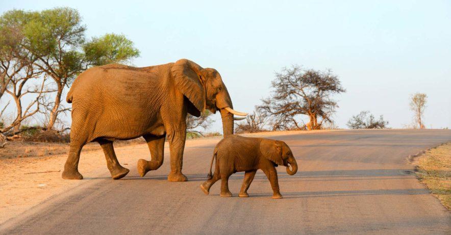 Safari Groepsreis Lodges - 13 DAGEN HET BESTE VAN ZUID-AFRIKA 108