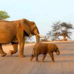 Safari Groepsreis Lodges 20 dagen Zuid-Afrika  Kruger park Swaziland, KwaZulu-Natal Tuinroute Lesotho en Kaapstad 11