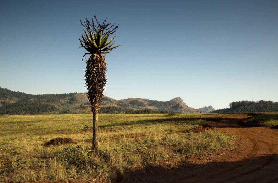 Safari Groepsreis Lodges - 13 DAGEN HET BESTE VAN ZUID-AFRIKA 59