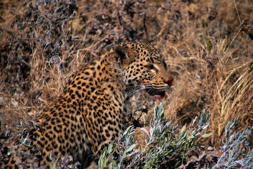 Safari Groepsreis Lodges - 13 DAGEN HET BESTE VAN ZUID-AFRIKA 96