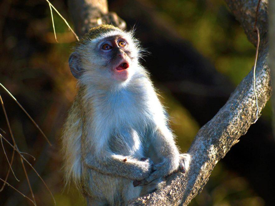 Safari Groepsreis Lodges - 13 DAGEN HET BESTE VAN ZUID-AFRIKA 147