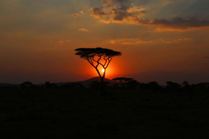 Safari Groepsreis Lodges - 13 DAGEN HET BESTE VAN ZUID-AFRIKA 115