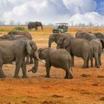 Safari Groepsreis Lodges - 30 DAGEN KAAPSTAD, ZUID-AFRIKA, NAMIBIË, BOTSWANA, VICTORIA FALLS, ZIMBABWE, JOHANNESBURG, KRUGERPARK & ESWATINI 73