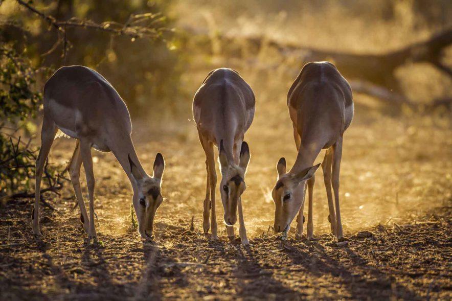 Safari Groepsreis Lodges - 19 DAGEN KAAPSTAD, NAMIBIË, BOTSWANA & VICTORIA FALLS 160