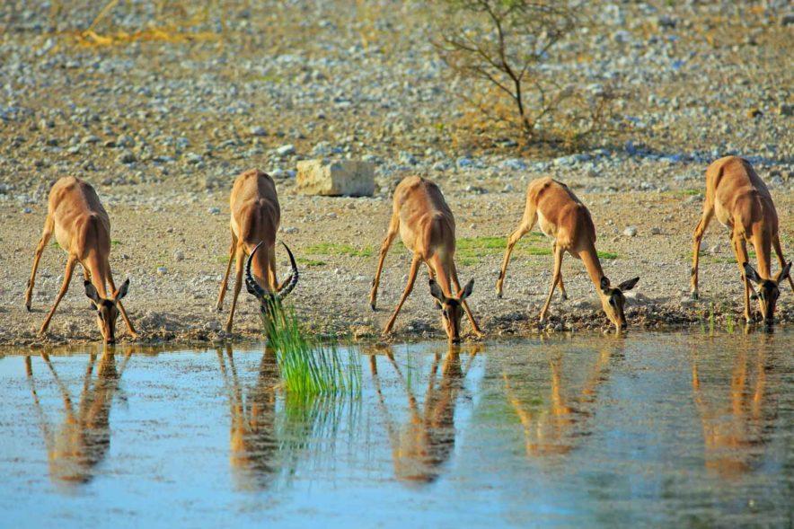 Safari Groepsreis Lodges - 19 DAGEN KAAPSTAD, NAMIBIË, BOTSWANA & VICTORIA FALLS 157