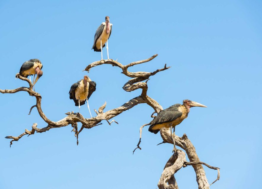 Safari Groepsreis Lodges 8 dagen botswana okavango delta en victoria falls avontuurlijk 49