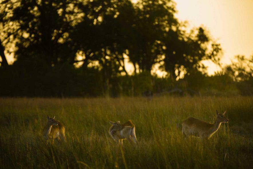 Safari Groepsreis Lodges - 19 DAGEN KAAPSTAD, NAMIBIË, BOTSWANA & VICTORIA FALLS 136