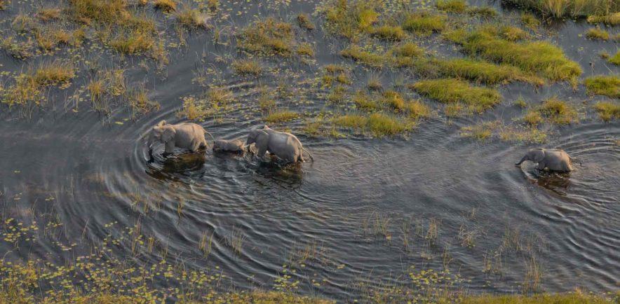 Safari Groepsreis Lodges 8 dagen botswana okavango delta en victoria falls avontuurlijk 59