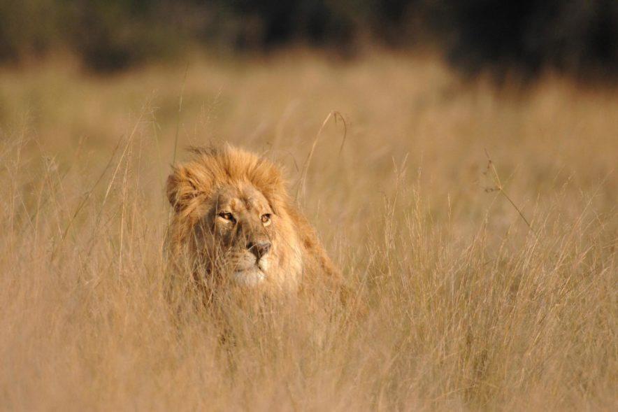 Safari Groepsreis Lodges - 19 DAGEN KAAPSTAD, NAMIBIË, BOTSWANA & VICTORIA FALLS 155