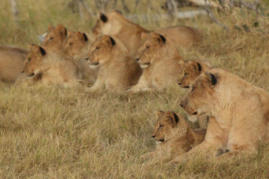 Safari Groepsreis Lodges 8 dagen botswana okavango delta en victoria falls avontuurlijk 39