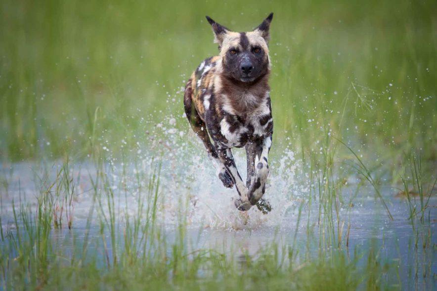 Safari Groepsreis Lodges 8 dagen botswana okavango delta en victoria falls avontuurlijk 57