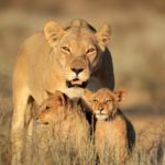 Safari Groepsreis Lodges - 20 DAGEN NAMIBIË, BOTSWANA & VICTORIA FALLS - Ontdekking 22