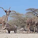 Safari Groepsreis Lodges - 20 DAGEN NAMIBIË, BOTSWANA & VICTORIA FALLS - Ontdekking 26