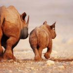 Safari Groepsreis Lodges - 20 DAGEN NAMIBIË, BOTSWANA & VICTORIA FALLS - Ontdekking 25
