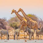 Safari Groepsreis Lodges - 20 DAGEN NAMIBIË, BOTSWANA & VICTORIA FALLS - Ontdekking 21